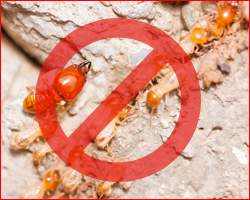 Anti-Termite Treatment